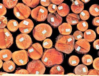 madeira_certificada_(2).jpg