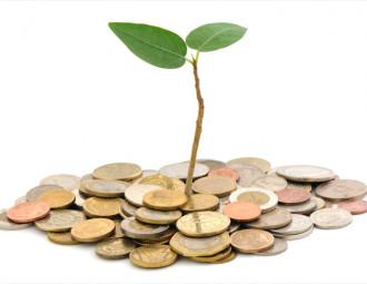 investimento_financiamento-mogno-africano-mudas-nobres-1.jpg