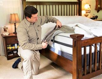 bed-bug-control.v10.jpg